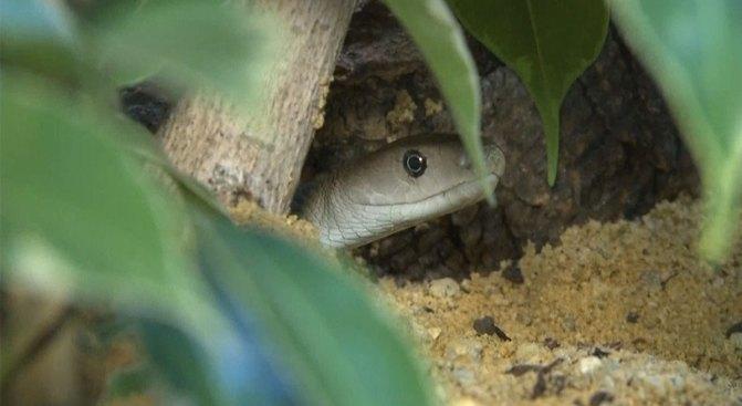 Revenge of the Toilet-Dwelling Serpent