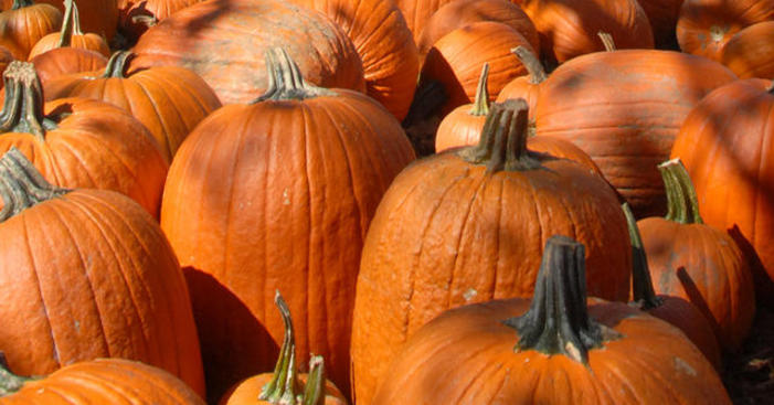 Pumpkins, Haunted Houses and More: Guide to All Things Fall in Chicago