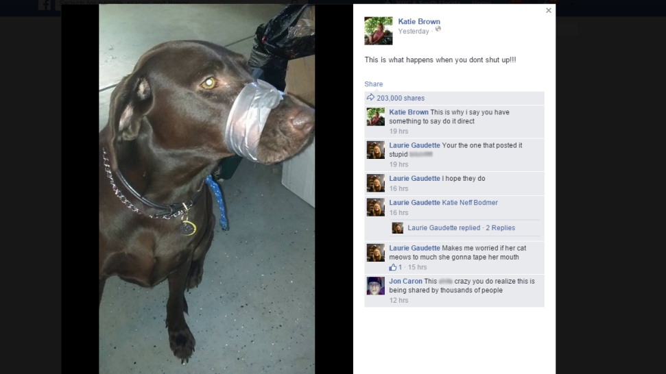 Facebook Post of Duct-Taped Dog Leads to Charge in North Carolina: Police
