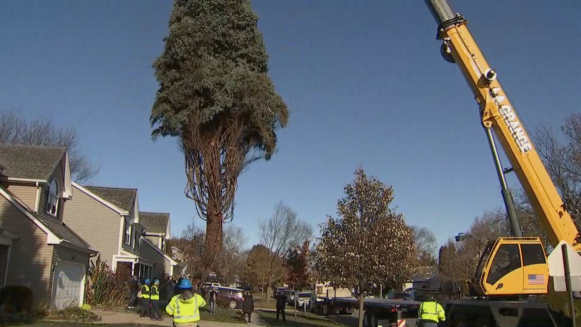 Chicago's Official Christmas Tree Cut Down