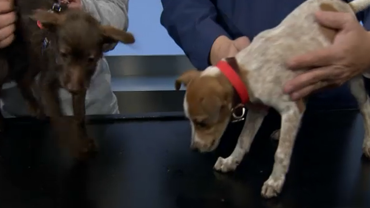 Clear The Shelters: Cute Puppies In Need of A Home
